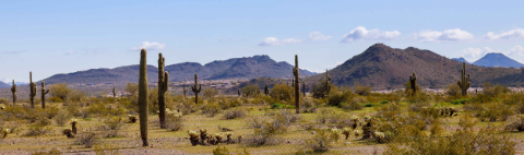 landscape-of-the-desert-cactus-and-mountains-in-ph-FUA4AD5
